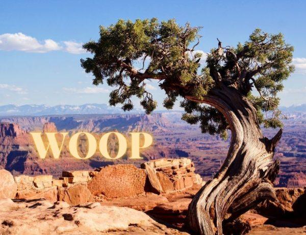 WOOP - foto van mooie boom door Jen Healy